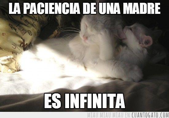 CG_13952_como_la_paciencia_de_una_madre
